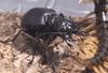 Japanese_Bug_Fights_Season_2_Episode_19